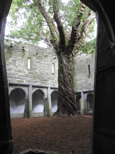 BEAUTIFUL tree growing in the Abbey Courtyard!