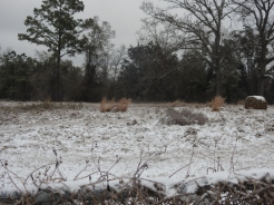 Field blanketed in Snow