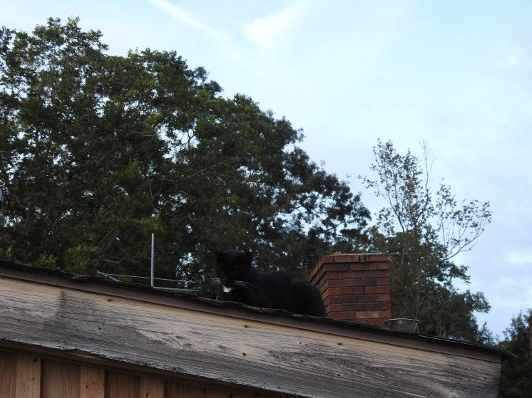 """Tux's favorite """"perch"""". On the roof above our Back porch door."""